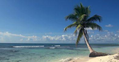 видео-обои «Tropical Island»
