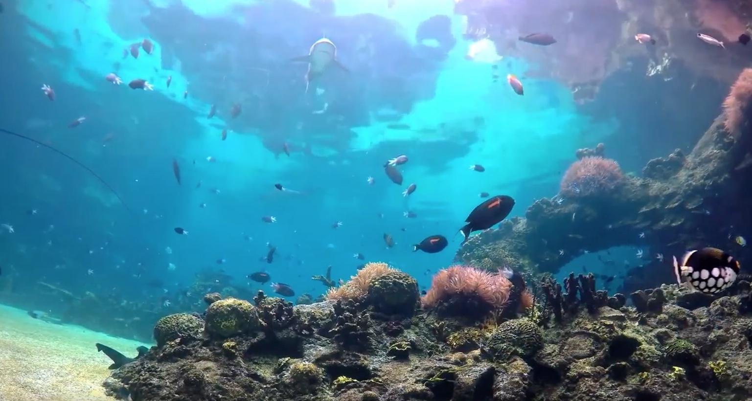 видео-обои «Большой аквариум»